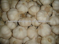 2013 new natural white fresh garlic