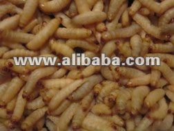 Wax Worms