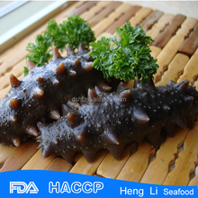 HL011 Low-Fat sea cucumber buyer wholesales