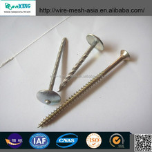 Large Flat Head Clout Nail Roofing Nail for Africa Market Head 8mm Stick Dia 3.15, Length Is 40mm
