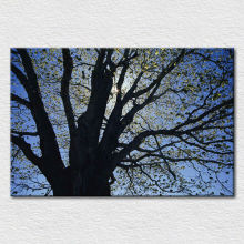 Wholesale Canvas printed modern photos on cotton canvas , beautiful art of big old tree oil painting framed free shipping