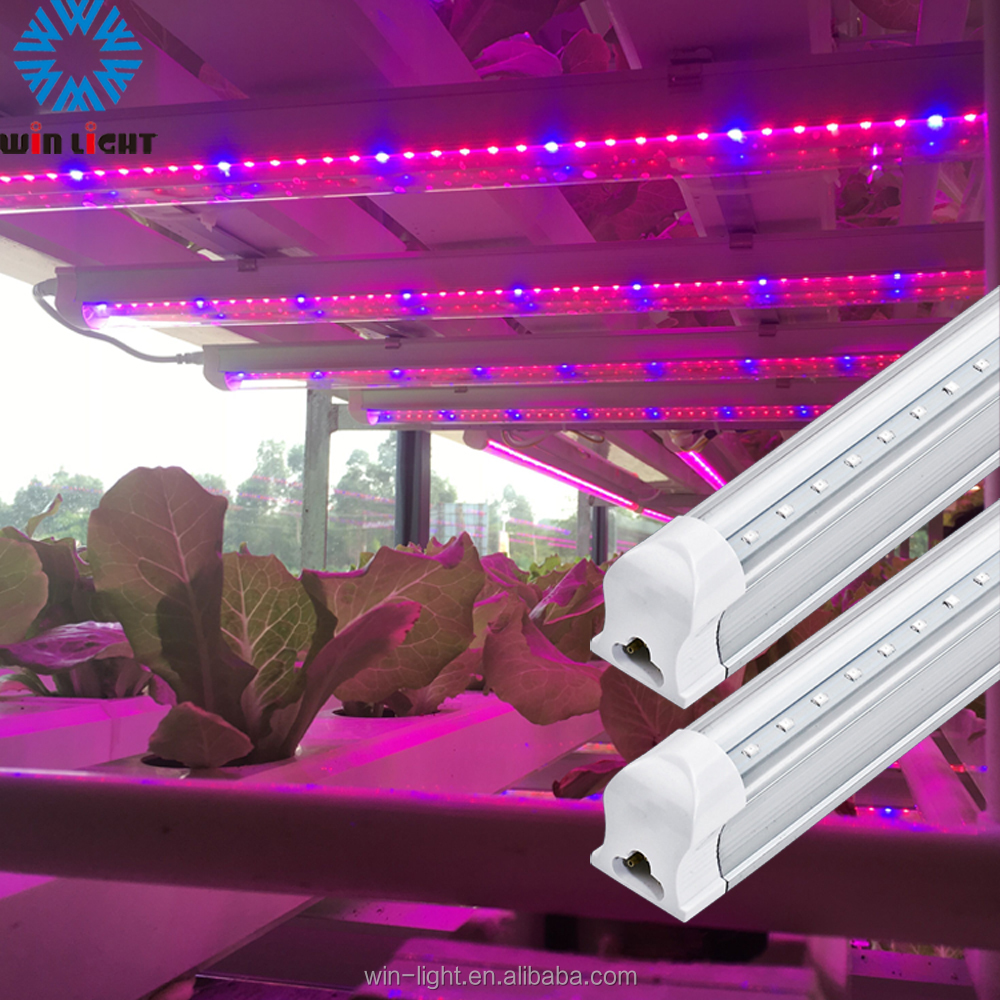 China manufacturer hydroponics vegetable and microgreen T5 T8 LED grow light