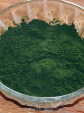 blue green chlorella algae protein powder