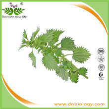 Nettle Extract 1% Silicic Acid Urtica Dioica L.premier Nettle Root Extract 1% Silic Acid