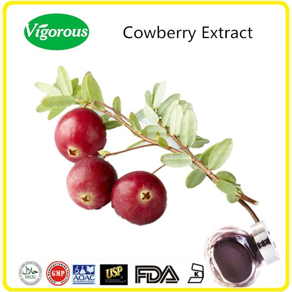 GMP Manufacturer bilberry extract/natural cowberry extract/high quality cowberry powder