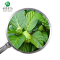 Imported Tahiti Raw Material Noni Fruit,Factory Supplier of Noni Extract Powder