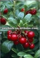 lingonberry plants extract powder