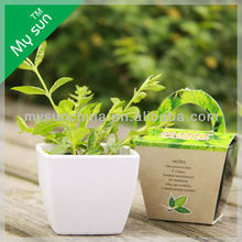 hot seller garden items,bucket planting set ,cheap flower planter.