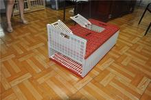 pigeon breeding cage racing for sale wooden pigeon cage with egg crate pvc coated pigeon cages