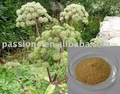 High quality of Angelica Extract Liguistlide/Ferulic acid