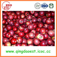 high quality red gala apple from china