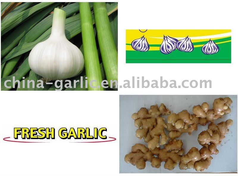 China Fresh Ginger and Garlic