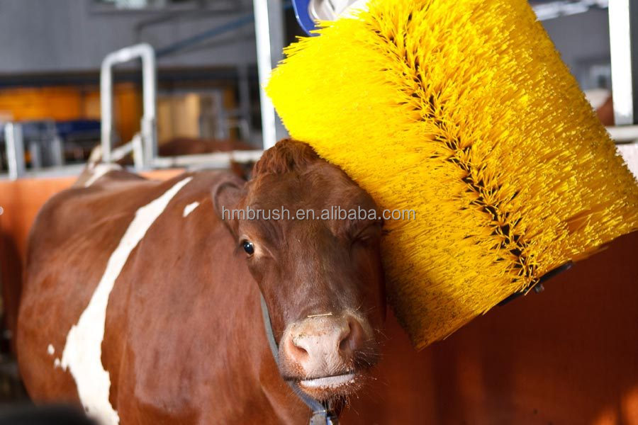 horse cleaning brush