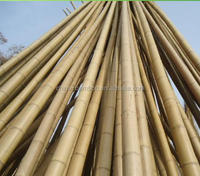 High Quality Bamboo Poles 6mm-60mm with Cheap Price raw bamboo poles yellow bamboo poles