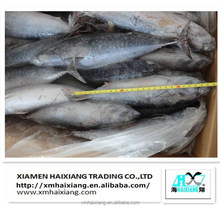 Frozen bonito fish with prices