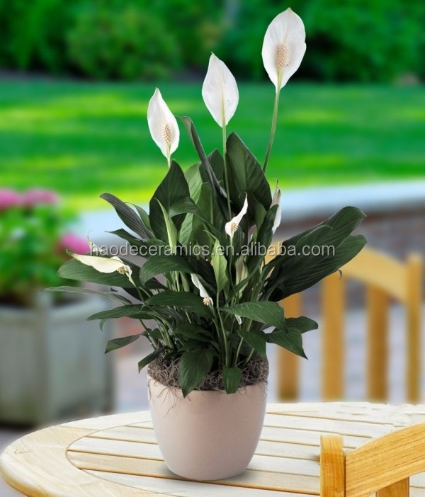 [ ZIBO HAODE CERAMICS]manufacturer directsale ECO-friendly glazed surface white flower pot for indoor green plant no hole
