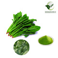 2017 Hot selling products organic spinach powder extract/spinach leaf extract juice powder