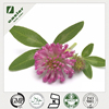 dried Red Clover Extract powder