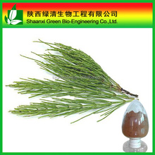 Factory Supply Field Horsetail Extract Silicate 7% 10%