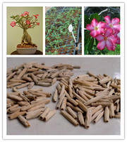 Desert Rose Seeds from China