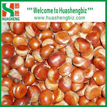 2015 New Hot Sell Fresh Raw Chestnuts Factory