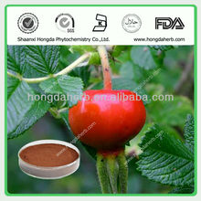 Pure Natural Rose Hip Extract Powder