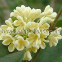 pure natural osmanthus concrete /Osmanthus Absolute/68917-05-5 -Plant Extract