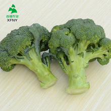 Competitive price and quality frozen vegetables broccoli wholesale price