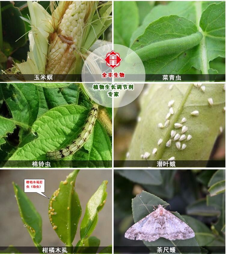 Insecticides and Pesticides Diflubenzuron CAS No.35367-38-5