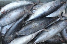 frozen bonito skipjack <strong>fish</strong> sale