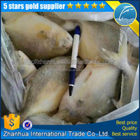 Frozen Golden Pompano Farm Raised Wholesale