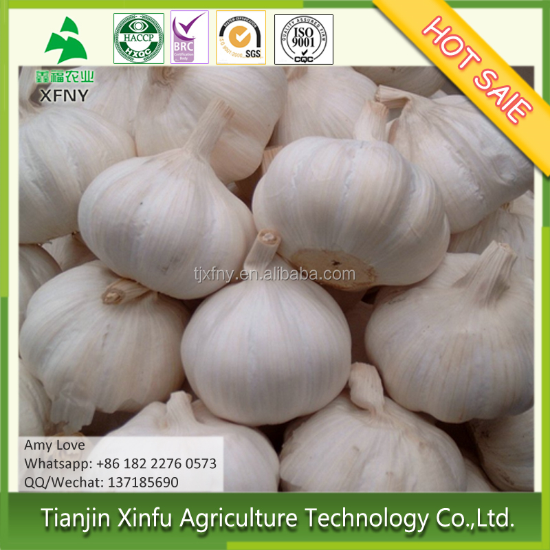 2016 new crop fresh garlic wholesale price