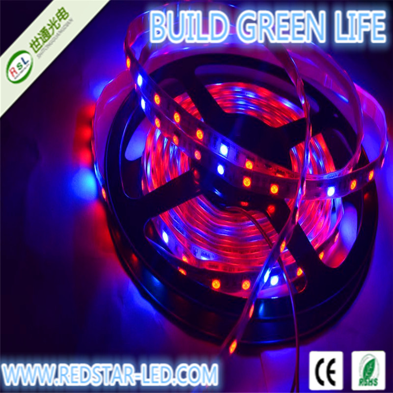 led strip lights price in india for plant growing