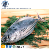 Frozen Bonito Tuna Fish For Sale