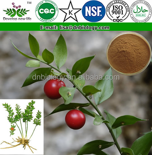 100% Natural Butcher's Broom Extract / High Quanlity Herbal Extract Butcher's Broom