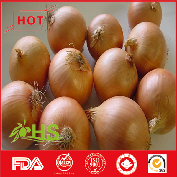 New season fresh red/yellow onion suppliers from China