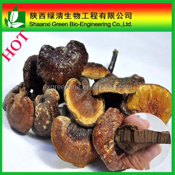 Organic and Fresh reishi mushroom extract tea