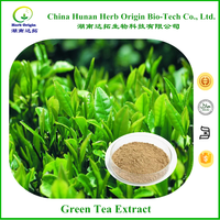 Free sample green tea extract powder, 100% pure green tea extract powder