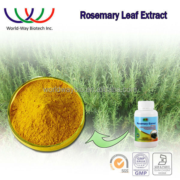 rosemary extract free sample supplier antioxidant for fish & meat nature preservative rosmarinic acid 25%