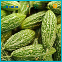 high blood pressuretraditional medicine tall-growing annual plant bitter melon extract