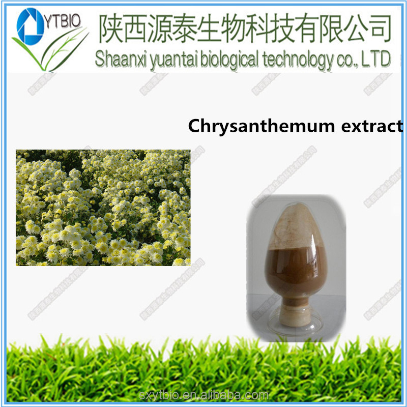Natural Chrysanthemum extract powder 100% plant extract
