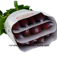 High-Quality Artificial Miss Rose Flower Rose Carola 60-80CM Long From Kunming Rolane