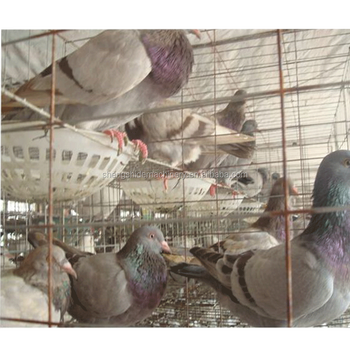 pigeon layer cage