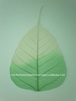 natural and dyed skeleton leaves in assorted sizes for art and crafts, greeting card manufacturers