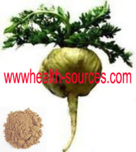 Natrual maca extract uses in herbal medicine sex for men