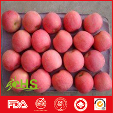 Supply Chinese Fresh Big Red Fuji apple