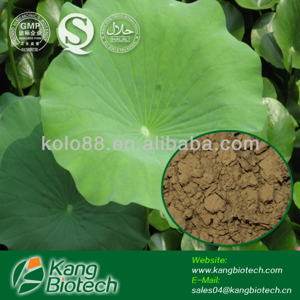 Herbal Lose Weight Plant Powder Lotus Leaf Extract