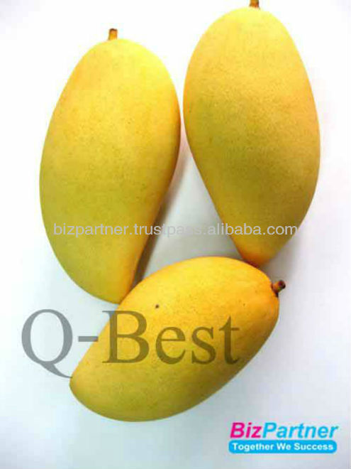 Hot Selling Best Quality Thai Fruit Fresh Mango