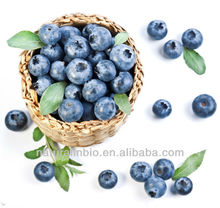 Food Additive Blueberry P.E. from GAP Plant Base