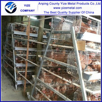 hot dipped galvanized chicken cage/ pvc pipe cages (manufacturer)
